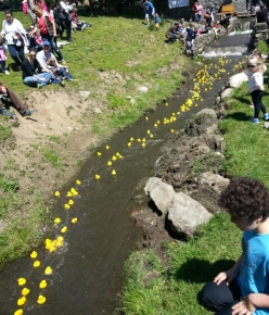 Masses of Ducks Race By