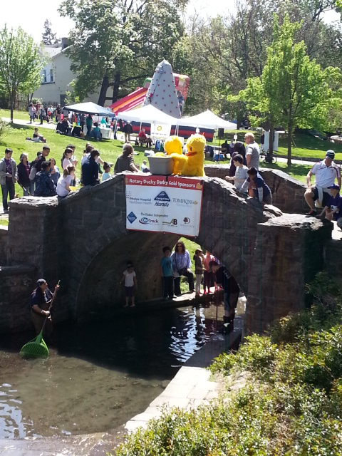 Rubber Duck Race About to Start